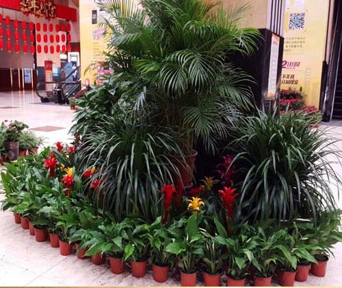 节日花坛造型