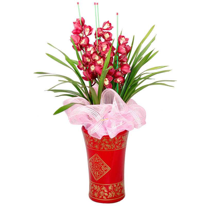 年宵花卉选北京绿生缘